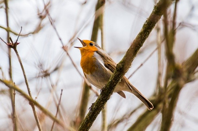 French pronunciation exercises can help you sing like a bird