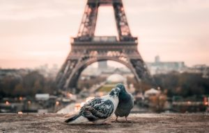 Learn romantic French phrases, sayings, and expressions to flirt and find love in France.