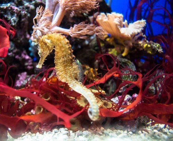 Seahorses are beautiful creatures