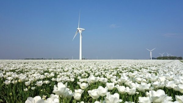 With the right methods, you can learn Dutch language faster than the wind blows.